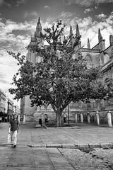 rbol (fergraf) Tags: sevilla spain fuji monumento centro andalucia monumentos patrimonio xe1
