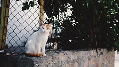 When you have to shoot, shoot, don't talk. (gokercy) Tags: street cat turkey island photography ada fuji ben trkiye aegean saturation diaries bozcaada ege x100 tenedos ayrlmak vsco istemiyorum
