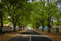 Enroute Mettur, TamilNadu | India (ThatCanonDude) Tags: travel india nature countryside highway roadtrip greenery salem tamilnadu mettur