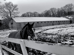 horse farm, belmont plateau (philly 2017) (Thrift Store Camera) Tags: philadelphia philly street photographer photo journal belmontplateau horsefarm