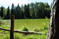 Nesodden (myhappyview) Tags: nesodden skoklefalltjernet water green summer warm grønt vann