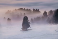 Im Nebel (Schneidersphotography) Tags: nebel fog foggy nebelschwaden nebelstimmung neblig morgen morgens winter schnee kalt cold snow early morning longexposure outdoor outdoors bayern bavaria germany deutschland nikkor nikon ngc langzeitbelichtung lee leefilters mist dunst march weather natur nature light manfrotto morgenstimmung