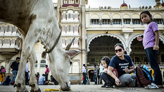 Mysore Palace (Sudharsan Ravikumar) Tags: cars fire fish macromondays madeofmetal bicycle horse coffee nyc me pier lines hiking catwa hair macromonday natural metal painting kodak desert design texture leaf hmm rural australia leica butterfly colorful zeiss newyork shore character restaurant bay asia canada station temple pretty dawn island classic farm bike mondays ontario reflections family