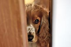 Criss (STE) Tags: criss cane occhio eye sguardo