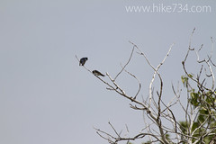 "Tree Swallows • <a style=""font-size:0.8em;"" href=""http://www.flickr.com/photos/63501323@N07/14241401318/"" target=""_blank"">View on Flickr</a>"