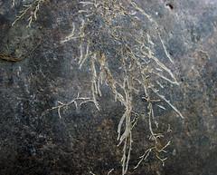 2003 grand teton, wyoming, montana (mr.fulton) Tags: teton petroglyph beartooth medicinewheel