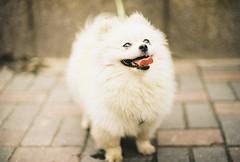 "(Shane Yeh) Tags: street color film animal 50mm shanghai kodak f14 nikonf3 ""shanghai confucioustemple"""