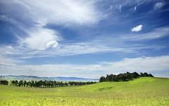 Cullerin Road, Breadalbane NSW