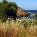 wildflowers near the coast IMG_5307