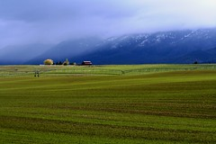 The Flathead......................................  Explore July 22 by The VIKINGS are Coming! - Early Spring planting, and late Spring snow showers in the Flathead Valley south of Ronan, Montana.  Those are the Mission Mtns hidden in the clouds in the background.