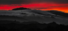 live blog post | san carlos, california (elmofoto) Tags: sanfrancisco california sunset silhouette fog clouds nikon unitedstates ridge sfbayarea peninsula treeline sancarlos marinelayer d800 filoli 70200mm caada fav100 fav200 fav300 10000v fav500 nikond800 fav400 fav600 fav700 elmofoto lorenzomontezemolo