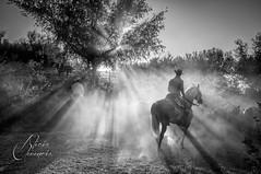 Los últimos rayos de luz / Last rays of sun (Alicia Clerencia) Tags: light sunset horses people luz contraluz caballos blackwhite gente tradition dust backlighting tradición polvo sacadelasyeguas2014