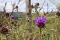 IMG_3219 (Switch62) Tags: bay scotland loch lomond millarochy 2014schotland