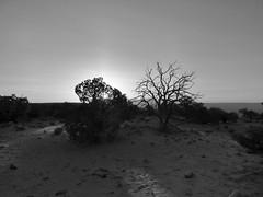 Canyonlands (tlucal) Tags: blackandwhite canyonland moabutah tonesandtextures