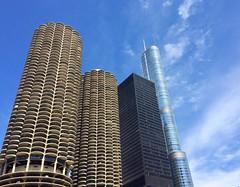 Wilco Bauhaus Trump.