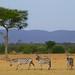 African safari, Aug 2014 - 057