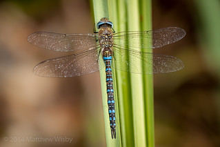 Aren't dragonflies great