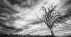 Deads'tree (Lanfeust84) Tags: blackandwhite nature monochrome landscape gris nikon europe suisse noiretblanc pluie wideangle tokina filter nd apples nuages paysage campagne arbre arbremort surnaturel grandangle davidfischbach d7100 deadthree 1116mmf28 lanfeust84
