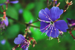 Feeling a little #blue today. (Puneet Dhingra) Tags: flowers blue light india green nature weather purple best cloros