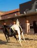 Horses (NAWAF AL HAMIDI) Tags: macro canon wow photo nice pic splash mypic صورة الوان عدستي صوري تصويري السعودية قطرات كانون مصورين الطائف سبلاش تراقص غردبصورة الناسالرايئه ahdphoto anstaqram