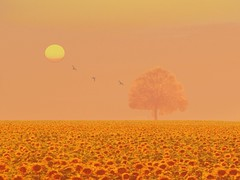 sonnenblumenfantasy (hlh 1960) Tags: summer sky sun mist flower tree nature fleur field birds sunrise germany landscape colours sommer natur blossoms himmel compo fantasy sunflowers landschaft sonne sonnenaufgang baum farben sonnenblumen