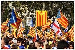 Via Catalana 2014 (Marc Mancini) Tags: barcelona canon freedom flag bcn catalonia via v bandera catalunya 300 manifestacion demostration indipendence 2014 estelada vias 1714 independenza 300anys 1000d viacatalana tricentenari araslhora