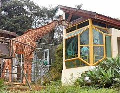 Image19 - Copia (Daniel.N.Jr) Tags: animal selvagem zoologico kodakz990