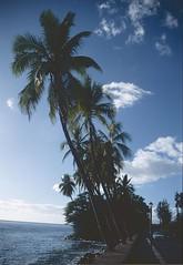 Hawai'i 1997 (patrikmloeff) Tags: world ocean voyage travel usa holiday beautiful clouds analog america palms hawaii coast vacances reisen holidays minolta pacific earth urlaub wolken bluesky maui palm insel palmtrees american palmtree terre 1997 voyager analogue traveling monde amerika ferien blauerhimmel reise kste welt erde amerikanisch palmen pazifik inseln ozean kstenstrasse verreisen inselgruppe