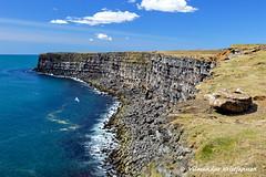 Krýsuvíkurberg (DSC_4020 vk) (Villi Kristjans) Tags: ocean sea summer sky cliff color berg birds june digital nikon reykjanes bjarg villi vk 2015 krýsuvík d3200 kristjansson kristjans vilmundur vkphoto