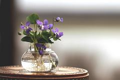 Happy Women's Day (Inka56) Tags: violets hbw vase flowers indoor bokeh