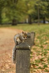 Scoiattolo (fotopierino) Tags: park parco london st natura colori londra jamess scoiattolo fotopierino
