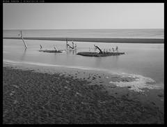 _64Z4516 copy (mingthein) Tags: trees blackandwhite bw tree beach monochrome digital landscape dead sand 645 pentax availablelight shoreline mangrove shore medium format ming seashore onn thein photohorologer 44x33 mingtheincom 645z mingtheingallery