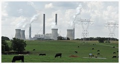 Cartersville Georgia Power Plant (Hewett Beasley/Beetree Studio) Tags: chimney panorama grass georgia cows powerlines smokestacks pollution generators powerplant chimneys co2 electicity greenhousegas cartersvillepowerplant