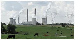Cartersville Georgia Power Plant (Hewett Beasley/Beetree Studio) Tags: chimney panorama grass georgia cows powerlines smokestacks pollution generators powerplant chimneys co2 electicity greenhousegas cartersvillepowerplant