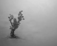 singing the rain (maheshganganathphotography) Tags: monochromatic minimalism tamron emptiness
