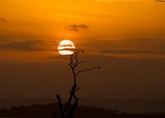 Golden lighting (mnreddy9) Tags: africa kenya lakebaringo goldenlighting sunsettingandsunrising