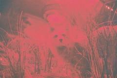 Hunted (Laura-Lynn Petrick) Tags: bear film animals 35mm dead outdoors lights texas hunting lion horns moose taxidermy indoors fox americana series roadkill hunters canadiana elks hunted taxidermist huntingclub lauralynnpetrick lauralynnpetricktexas taxidermytexas basspropshops texashunters