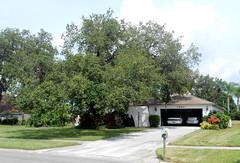 Sarasota - House Before 2014 Tree Work (roger4336) Tags: house tree oak florida kingston liveoak sarasota 2014 kingstondrive gulfgateeast
