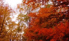 "Warm Sun peaking thru Orange & Red Maple Trees • <a style=""font-size:0.8em;"" href=""http://www.flickr.com/photos/34843984@N07/15238496369/"" target=""_blank"">View on Flickr</a>"