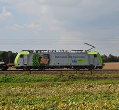 486 501 BLS Cargo (Daniel Powalka) Tags: track feld railway loco bls sonne railroads freighttrain bahnstrecke elok lokfhrer klv gterzge bergstrase alpinisten nikond7100 br486