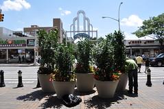 Bliss Plaza - Summer Planting