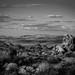 The Great Mojave Desert