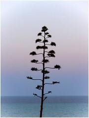 Felicidad...Torrevieja 2008 - 08-08.711.2 (Eric Lavergne) Tags: espaa paisajes mer mar rboles agosto arbres verano felicidad cielos atardeceres t 2008 bonheur paysages minimalist aot ciels fotografa torrevieja findaprsmidi