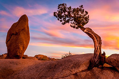 Juniper and Boulder (davecurry8) Tags: california nationalpark desert joshuatree boulder mojave monolith juniper