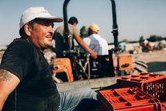 IMG_2678 (qbetto.com) Tags: vineyard workers wine harvest grapes sicily uva sicilia siracusa vino vendemmia agricoltura vigneto pupillo operai moscato agricolture raccolto solacium