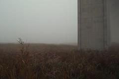 Grass, a Monolith (wood_owl) Tags: morning bridge autumn ohio mist fall grass fog october overpass monolith smallthings bigthings underthebridge cuyahogavalleynationalpark i80overpass sooc