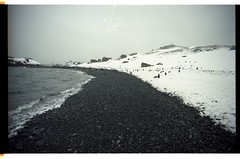 Sunbathing on a Secluded Antarctic Beach (becklectic) Tags: beach penguin antarctica 1998 antarcticpenninsula 19981200302g
