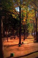 One day baby we'll be cold (acoper-mi inima cu ceva) (Cristian tefnescu) Tags: park morning autumn sun fall leave colors town leaf laub herbst sonne bltter parc rostig soare frunze fav25 toamn ruginiu ora diminea