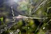 El manton del sastre (David A.R.) Tags: david canon eos ar vigo fotografo padron araujo pontecesures grupal valga 40d kdd´s