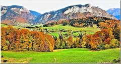 Panorama d'automne (arno18) Tags: trees panorama france nature grass automne canon cows hautesavoie rhnealpes bellevaux rocdenfer chevrerie valleverte lesmouilles ruby5 hirmantaz rocherdelamotte valeeverte